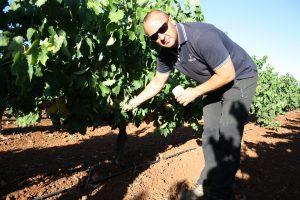 control de maduración de la uva bodega almendralejo