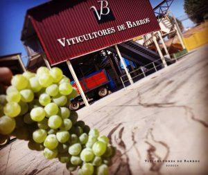 recepción de la uva en la bodega